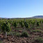 wine-tour-adamobio