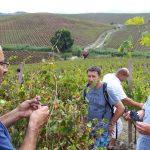wine-tour-alcamo
