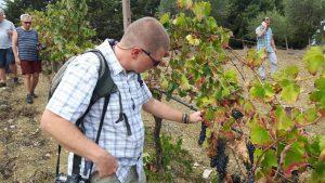 wine-tour-trapani