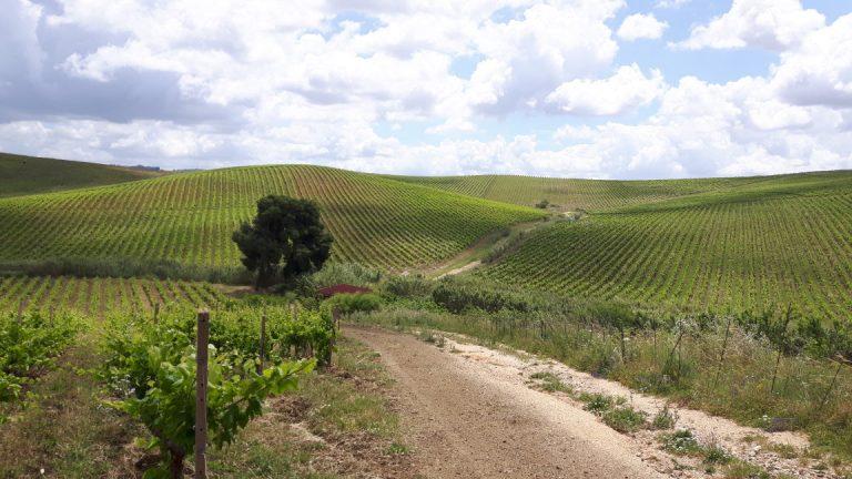winetour-adamobio2